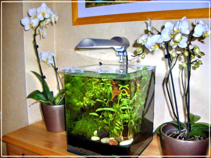 http://www.nanodouce.com/images/nano-aquarium-eau-douce.jpg